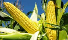 ¿Cuál es la importancia de la agricultura en El Salvador?