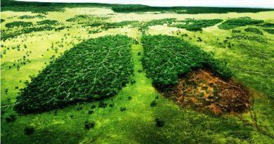 Instituciones que velan por el medio ambiente en El Salvador
