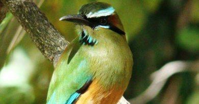 Flora y fauna de El Salvador