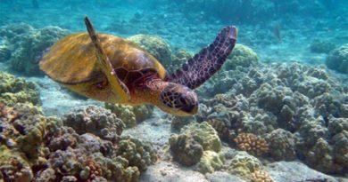 Arrecife Los Cóbanos