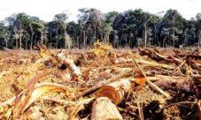 Problemas ambientales de El Salvador