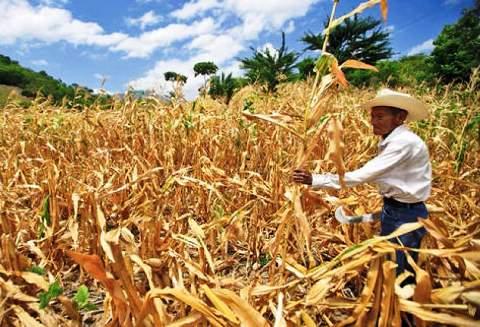 ¿Cómo afecta la sequía en El Salvador?
