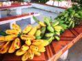 Guineos majonchos de El Salvador