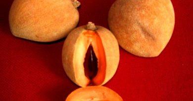 Zapote, fruta de El Salvador