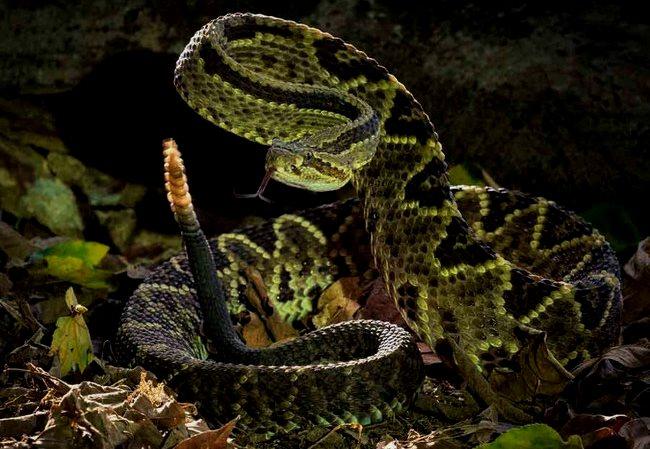 Serpientes comunes de El Salvador